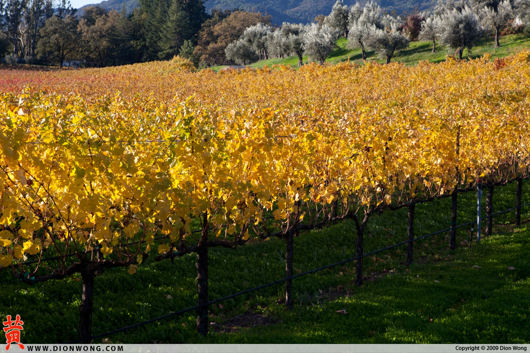 St. Helena Vineyard